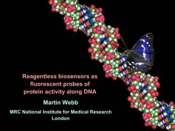 Reagentless biosensors as fluorescent probes of protein activity