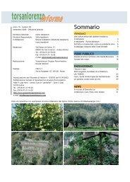 Settembre - Gruppo Torsanlorenzo
