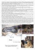 Shepherd News 2 - German Shepherd Dog League NSW Inc. - Page 4