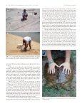 Terrestrial burrowing in nesting softshell Turtles - Harding University - Page 2