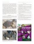 Terrestrial burrowing in nesting softshell Turtles - Harding University - Page 3