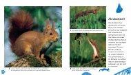 Akrobatisch! - Hase und Igel Verlag