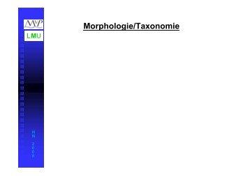 Morphologie/Taxonomie