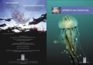 Download Jellyfish in Our Coastal Seas - The Heritage Council