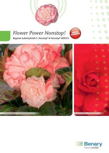 Flower Power Nonstop! - Benary
