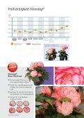 Flower Power Nonstop! - Benary - Page 3