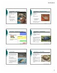 """Topic 7: """"Reptile"""" Diversity What are """"reptiles""""? Three Major Clades ... - Page 3"""