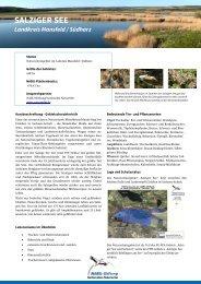 SALZIGER SEE - NABU-Stiftung Nationales Naturerbe