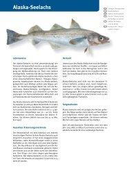 Alaska-Seelachs - Fisch