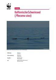 (Phocoena sinus) - WWF Schweiz