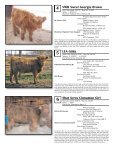 AHCA National Sale - American Highland Cattle Association - Page 4