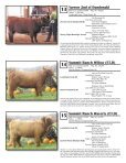 AHCA National Sale - American Highland Cattle Association - Page 7