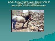 Spiti horse - CSK Himachal Pradesh Agricultural University
