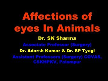 Affections of eyes In Animals