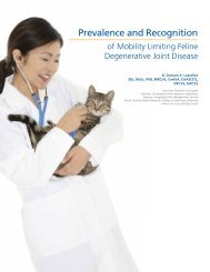 Prevalence and Recognition - HillsVet