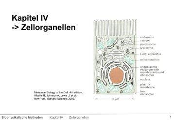 Kapitel IV -> Zellorganellen