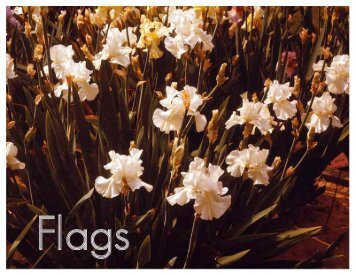 Flags, Issue #4 January, 2012 - Historic Iris Preservation Society