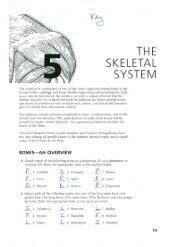 Chapter 5 Skeletal System key - TeacherWeb