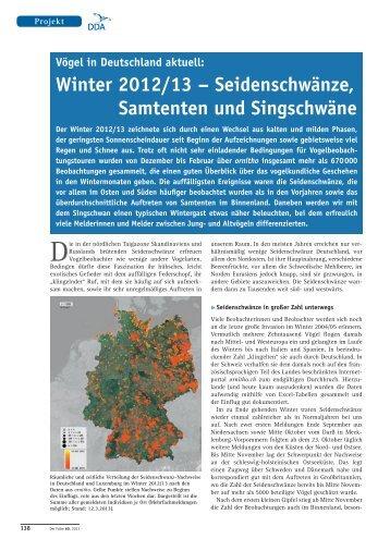 Winter 2012/13 – Seidenschwänze, Samtenten und Singschwäne