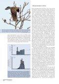 Winter 2012/13 – Seidenschwänze, Samtenten und Singschwäne - Page 5