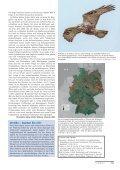 Winter 2012/13 – Seidenschwänze, Samtenten und Singschwäne - Page 6