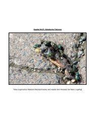 Kapitel 04.07: Abiotische Faktoren Totes organisches ... - Hoffmeister.it
