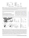 Platelet Activation and Platelet-Monocyte Aggregate Formation ... - Page 5