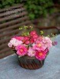 Eleonore Schick - Blüten, Blätter, Früchte - Page 2