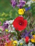 Eleonore Schick - Blüten, Blätter, Früchte - Page 4