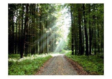 Feldholzanbau in Oberschwaben