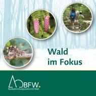 Wald im Fokus - BFW
