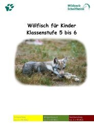 Klasse 5 bis 6 - Wildpark Schorfheide