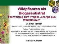 Vortrag von Dr. Birgit Vollrath zum Download (PDF) - Bioenergie ...