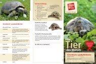 Griechische Landschildkröte - Zoo & Co.