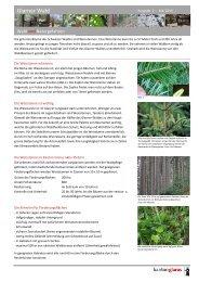 Glarner Wald 2 Tannenförderung [PDF] - Kanton Glarus