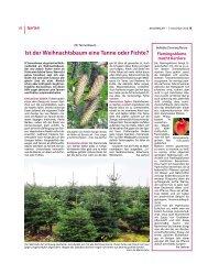 Ist der Weihnachtsbaum eine Tanne oder Fichte? - Bauernblatt ...
