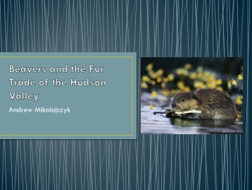 Beavers and the Fur Trade of the Hudson Valley - The Hudson River ...