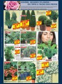 Schöner Garten im Sommer? WERDEN SIE JETZT AKTIV! - Beinbrech - Page 2