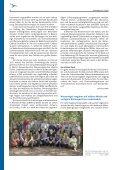 DDA-Aktuell 3/13 - Dachverband Deutscher Avifaunisten - Page 6