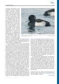 DDA-Aktuell 3/13 - Dachverband Deutscher Avifaunisten - Page 7