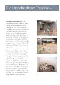 Von der Tragödie der Galgos... - Hundewelt.at - Seite 3