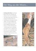 Von der Tragödie der Galgos... - Hundewelt.at - Seite 4