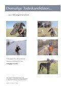 Von der Tragödie der Galgos... - Hundewelt.at - Seite 7