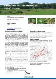 Dammühlenfließniederung - NABU-Stiftung Nationales Naturerbe