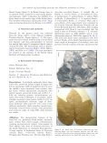 Further contribution to the low latitude leaf assemblage from the late ... - Page 3