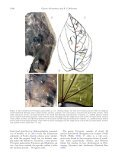 Further contribution to the low latitude leaf assemblage from the late ... - Page 6