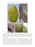 Further contribution to the low latitude leaf assemblage from the late ... - Page 7