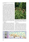 Obuwik pospolity - Page 2