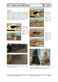 337 Black-eared Wheatear - Laboratorio Virtual Ibercaja - Page 2