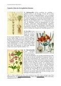 Kulturgeschichtliches zur Pflanzenordnung Lilienartige ... - GTFCh - Page 2